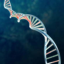 Gene Research May Lead To Celiac Drug Search