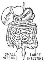 Intestinal Damage and Gluten